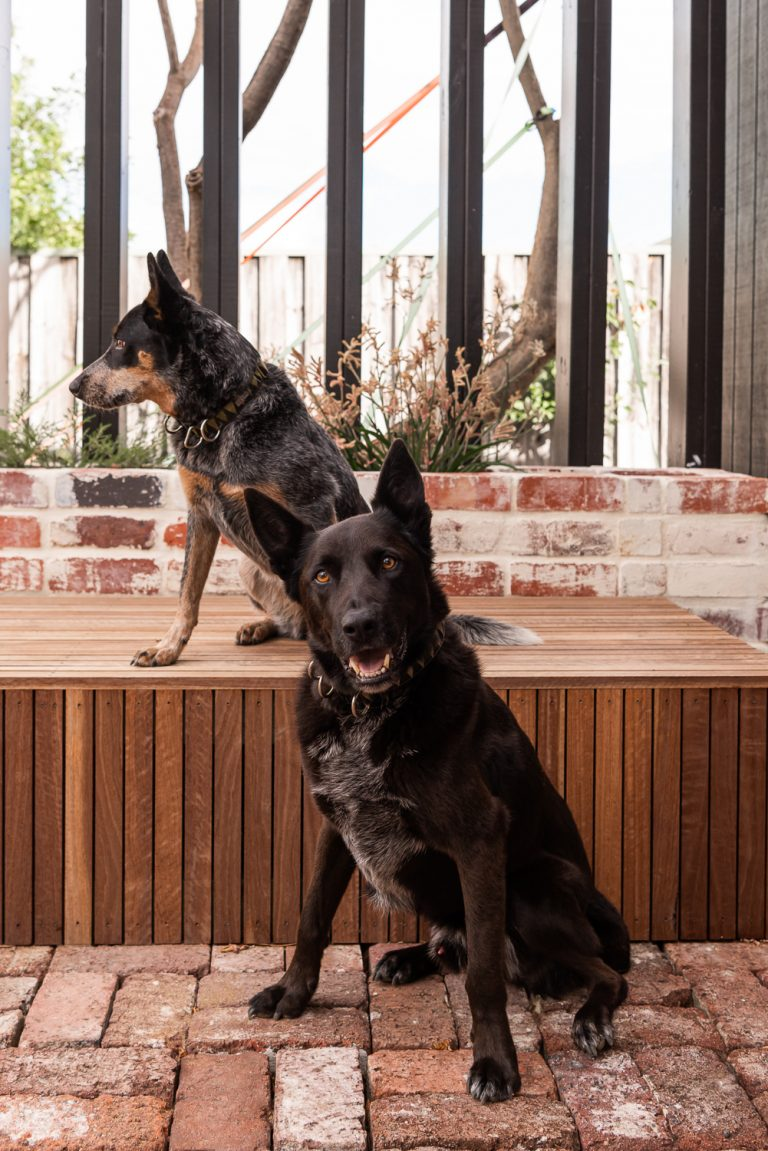 bayswater-house-dogs